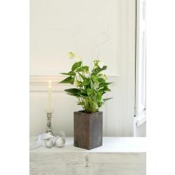 Pojedyncza roślina-wybór florysty