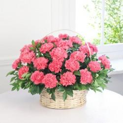 Różowy rumieniec