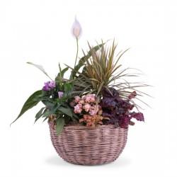Kompozycja roślin mieszanych