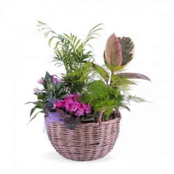 Kompozycja roślin w koszu