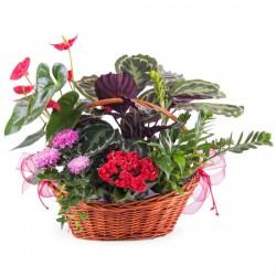 Kompozycja roślin premium