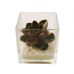 Cactus in glass vase Subject to availability