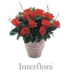 Czerwone róże w ceramicznym wazonie