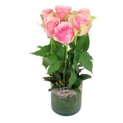 6 różowych róż w wazonie
