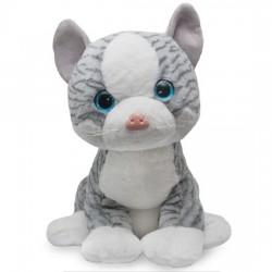 Miauczący kot Edward