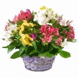 Kompozycja kwiatów w koszyku