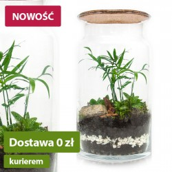 Forest in a jar DIY - Grove