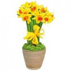 Spring joy combination