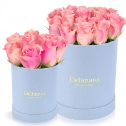 Pink roses in a blue box