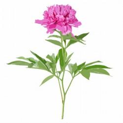 Single Flower Presentation