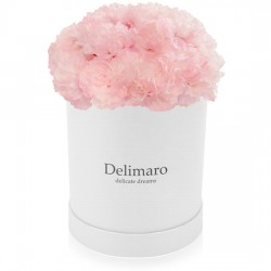 Pink carnations in a white box