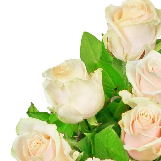 Kwiaty Blask Poranka