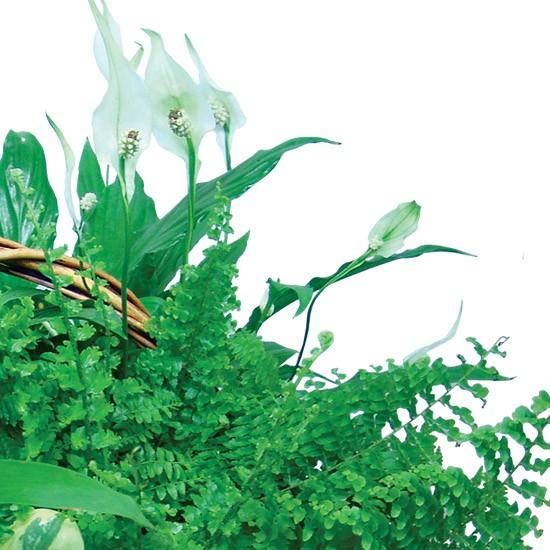 Kompozycja z roślin doniczkowych