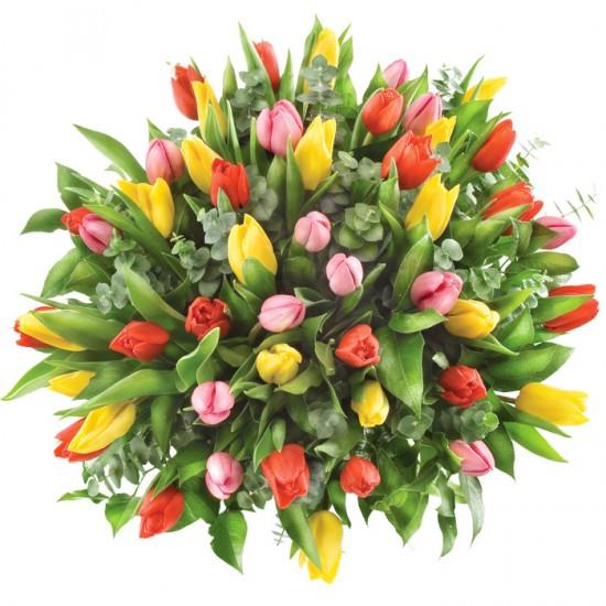 Kwiaty 50 kolorowych tulipanów