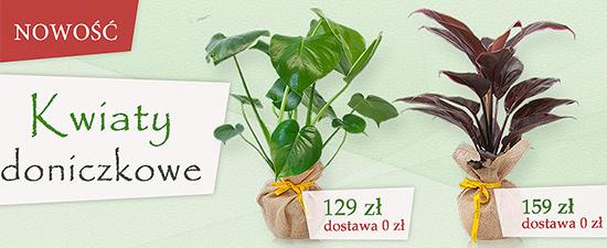 Rośliny doniczkowe w dostawie!