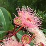 Użyteczne drzewo i pręcikowate kwiaty
