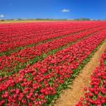 Kwiatowa podróż dookoła świata