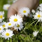 Ładne i smaczne - czyli słów kilka o kwiatach jadalnych