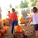 Dekoracje na Halloween - sprytne pomysły
