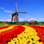 Tulipan - kwiat wielu znaczeń