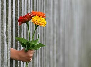 Liczba kwiatów
