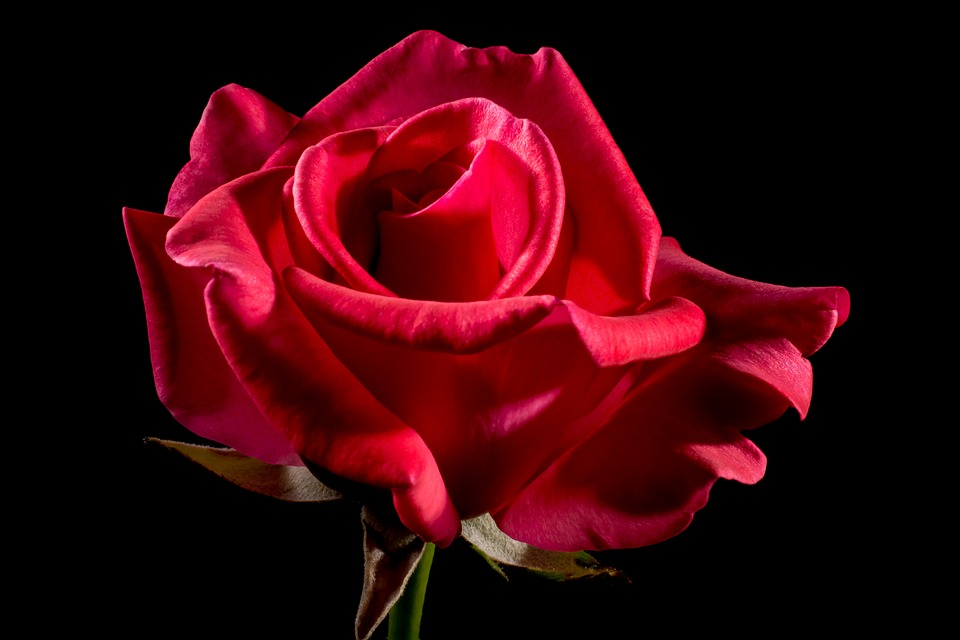 red-rose-320891_960_720