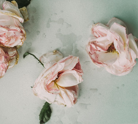suszonekwiaty