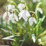 Kwiatowy uśmiech wiosny