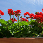 7 roślin, które musisz mieć na balkonie