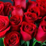 Co oznaczają poszczególne kolory róż?