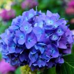 5 kwiatów, które kwitną w sierpniu