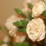 Goździki - drobne kwiaty w wielkim stylu