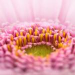 Majowe bukiety z kwiatów sezonowych