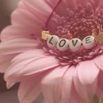 Co symbolizują letnie kwiaty?