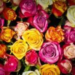 Co komunikują kolory kwiatów?