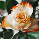 Eleganckie i męskie kwiaty dla Dziadka