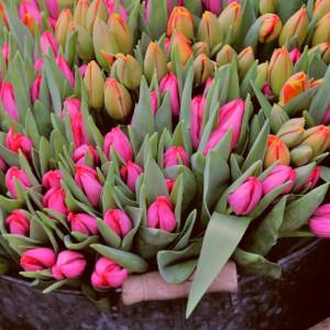 tulipanki do 100 zł