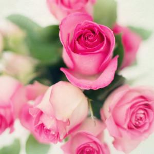 Różyczki na 26 maja