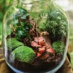 Las w słoiku DIY - ozdoba, którą można stworzyć samemu