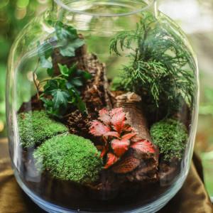 Las w szklanym słoiku