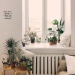Rośliny doniczkowe jako dobra alternatywa na prezent