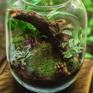 Roślina zamknięta w słoiku