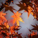 Bukiety w barwach jesieni