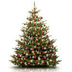Zjawiskowa choinka - jakie drzewko wybrać