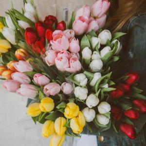 kobieta-tulipanki