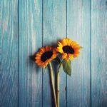 Słoneczniki w kulturze - gdzie możemy je spotkać?