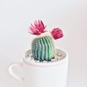 Kaktusy - wszystko co trzeba wiedzieć