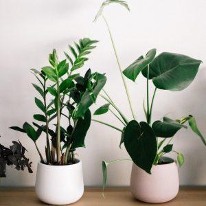Kwiaty do biura - jak je wybrać?