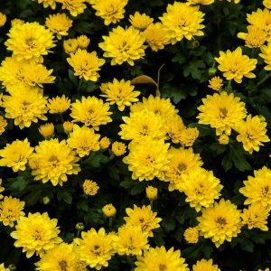 Najtrwalsze kwiaty na cmentarz